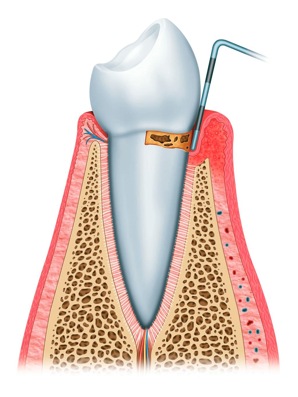 Odontología Ortodoncia Periodoncia